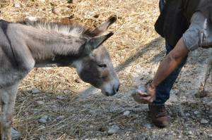 donkey exploring contact