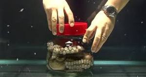 Why put this Octopus in a jar?